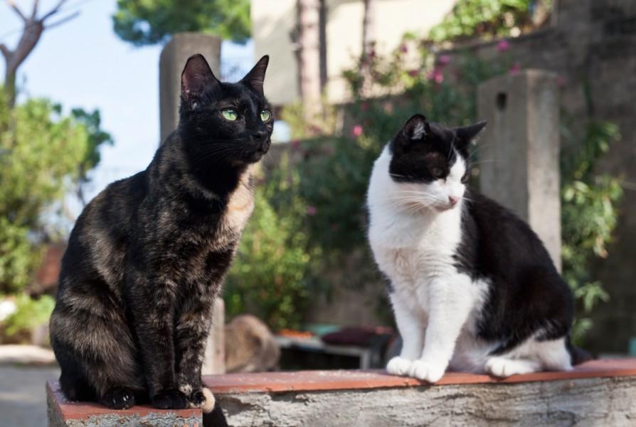 Zwei Katzen auf dem Hof